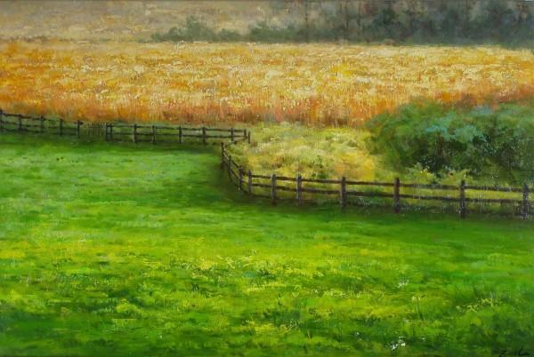 Kornfeld mit Zaun